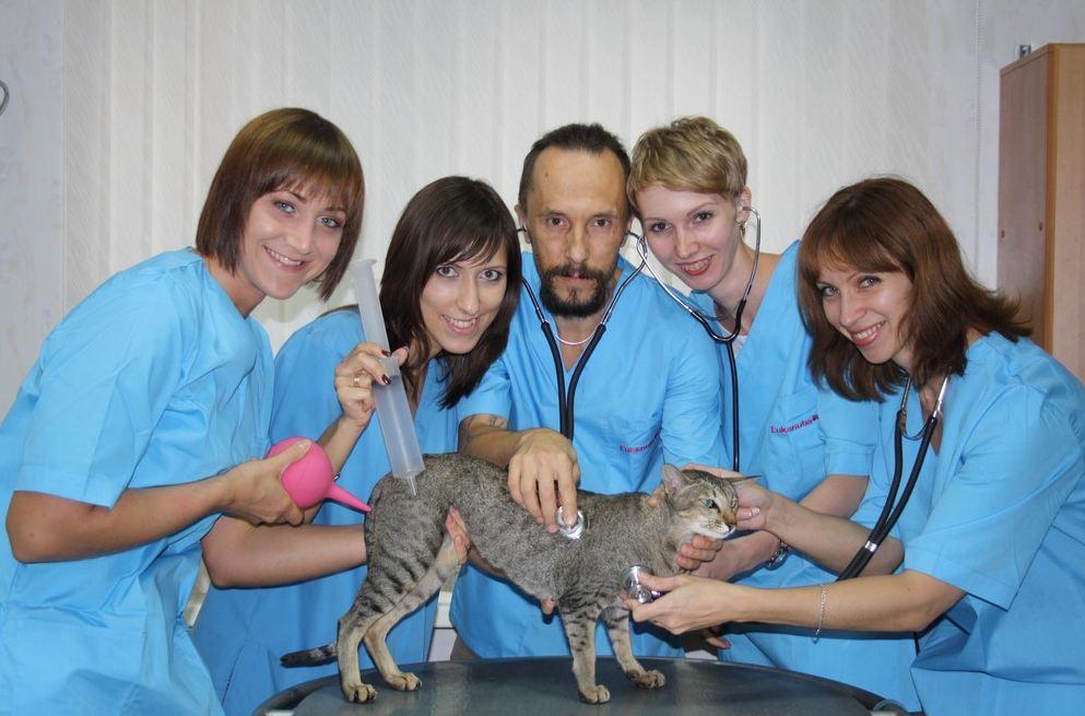 Хороший ветеринарные клиники алматы круглосуточно - e