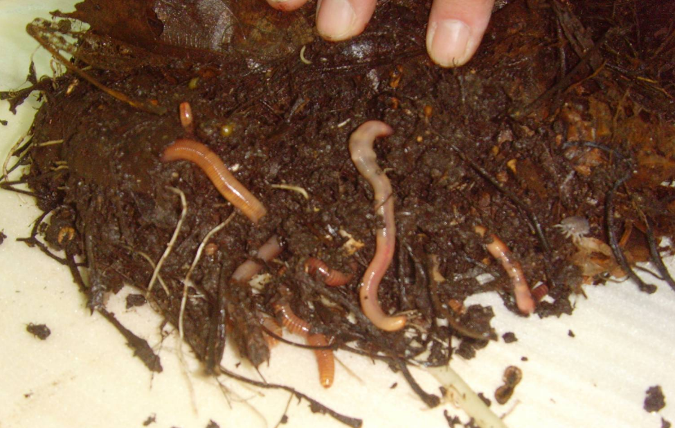 Ютуб выращивание дождевых червей 18